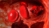 Blood Cells In A Vein — Stock Photo