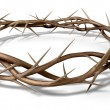 A Crown Of Thorns - Photo