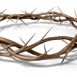 A Crown Of Thorns — Stock Photo