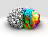 Left And Right Brain Concept Front — Stock Photo