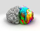 Sol ve sağ beyin kavramı ön — Stok fotoğraf