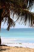 Zanzibar White Sandy Beach And Palm Tree — Stock Photo