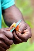 Hands Holding Blade Slicing Fresh Turmeric — Stock Photo