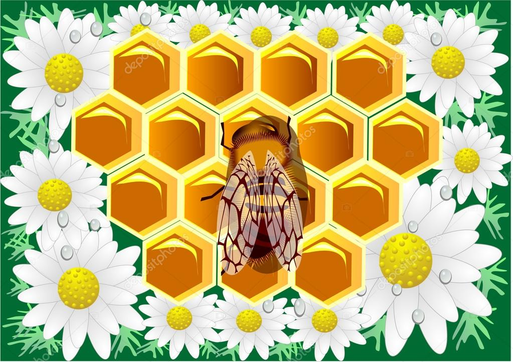 Beeswax. Macro of working bee on honeycells with chamomile.  Stock Vector #13920048