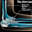 Stok Vektör: Elbow joint