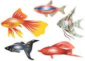 Aquarium fish — Stock Vector