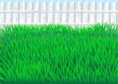 Garden grass — Stock Vector