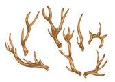 Antlers — Stock Vector