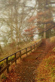 Misty Forest Footpath — Stock Photo