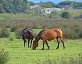 Horses couple in green meadow — Stock Photo