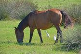 Horse grazing grass counter light — Stock Photo