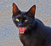 Evil black cat — Stock Photo
