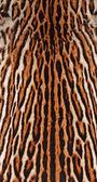 オセロット毛皮背景 — ストック写真