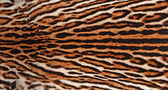 леопардовый мех — Стоковое фото