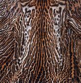 Leopard skin pattern — Stock Photo