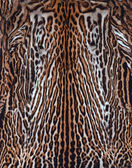 Beautiful leopard skin — Stock Photo