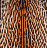 Leopard skin texture — Stock Photo