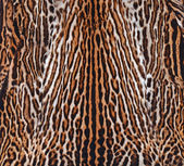 Leopard skin texture — Stock Photo