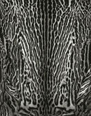Real leopard skin details — Stock Photo