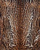 Beautiful leopard skin — Stock Photo