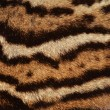 Stock Photo: Ocelot fur stripes
