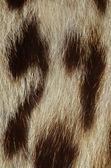 Ocelot fur closeup — Stock Photo
