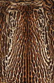 Real fur of leopard — Stock Photo