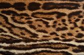 Ocelot fur background — Stock Photo