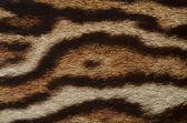 Fondo de piel de Jaguar — Foto de Stock