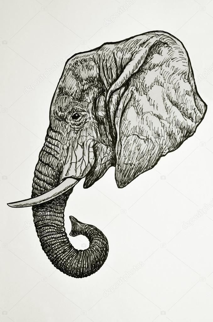 elefanten kopf seitenansicht stockfoto nico99 39173659. Black Bedroom Furniture Sets. Home Design Ideas