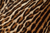 Leopard skin background — Stock Photo