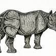 rhinocéros indien dessin — Photo #40432879