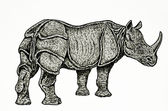 Indian rhino drawing — Stock Photo
