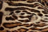 Ocelot skin background — Stock Photo