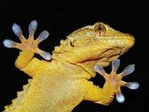 Portret gecko — Zdjęcie stockowe