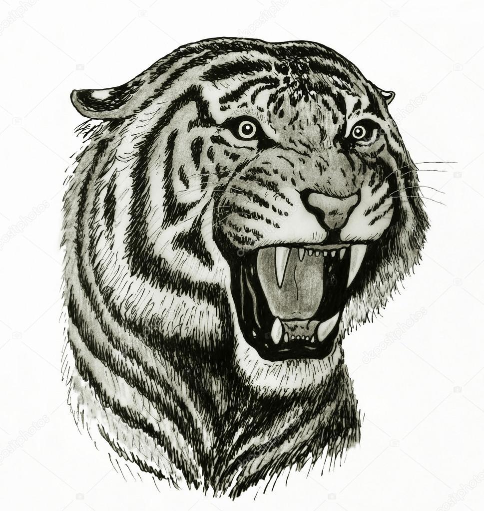 tiger gesicht zeichnen stockfoto nico99 43248231. Black Bedroom Furniture Sets. Home Design Ideas