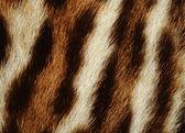 Tiger fur — Stock Photo