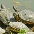 Water turtles family — Stock Photo #45367493