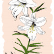 Stock Vector: Drawn flower of white lily