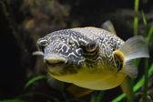 Gelber fisch — Stockfoto