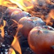 Shashlik of tomato — Stock Photo