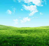 Sky and grass background — Stock Photo