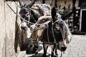Saddled Donkeys — Stock Photo