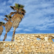 Palm trees in Tarragona - Stock Photo