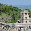 Temple of the Count in Palenque, Mexico — Stock Photo