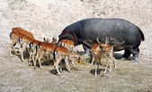 Animal community - be different — Stock Photo