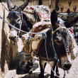 Donkeys in the streets of Fez, Morocco — Stock Photo