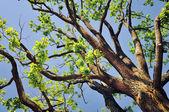 Galhos de árvores na primavera — Foto Stock