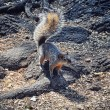 Squirrel at Chapultepec at Mexico City — Stock Photo #45372453