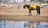 Casablanca beach, Morocco — Stock Photo